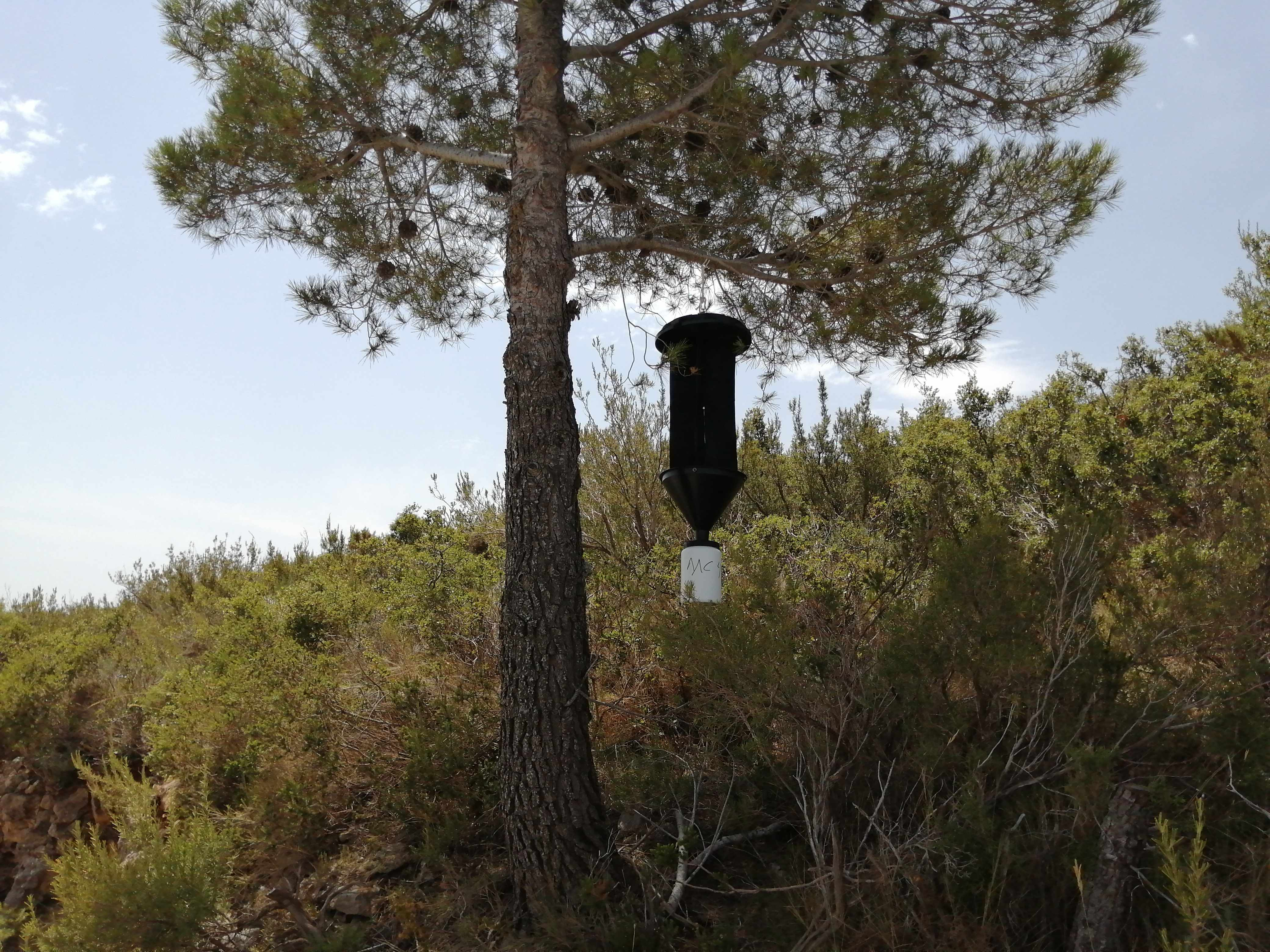 Traps installed in Replication Sites of Spain