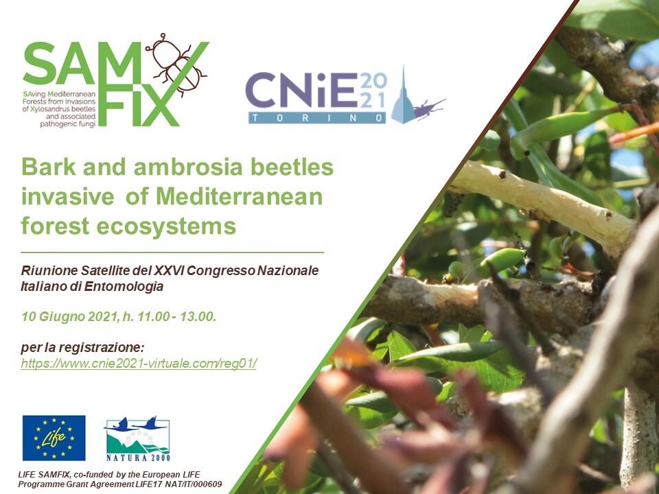 Meeting satellite del Congresso Nazionale Italiano di Entomologia 2021