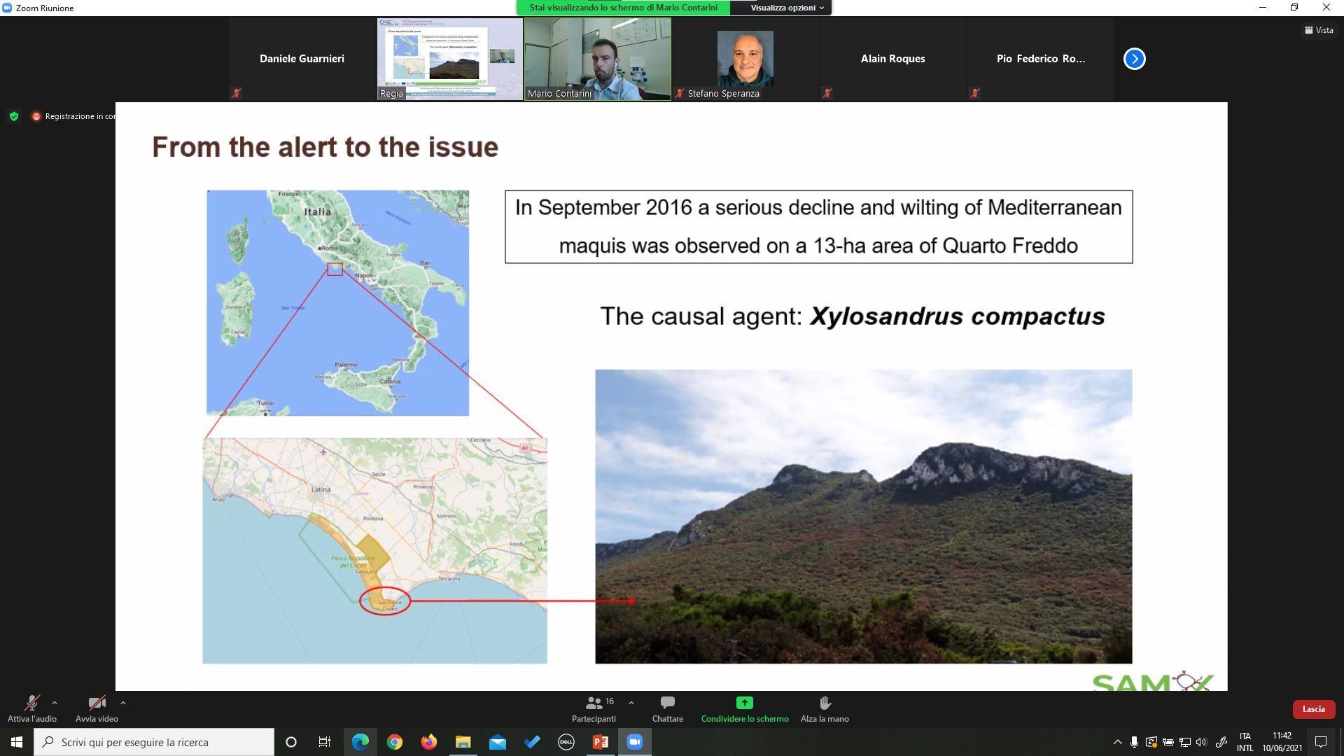 """Grande partecipazione per il webinar """"Bark and ambrosia beetles invasive of Mediterranean forest ecosystems"""""""